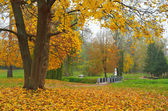 Autumn day in the park  — Stock Photo