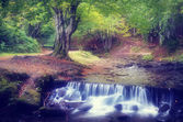 Cascade River in the forest  — Stock Photo