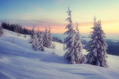 Evening winter — Stock Photo