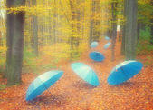 Umbrellas in the wood — Stock Photo