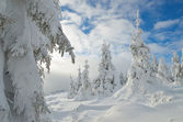 Winter forest under snow  — Stock Photo
