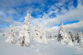 Winter forest under snow — Stok fotoğraf
