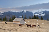 Pasture in the mountain village  — Stock Photo