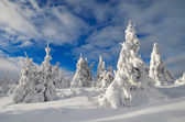 Winter landscape with mountain forest  — Stock Photo