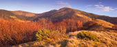 Colorful Autumn in the mountains — Стоковое фото