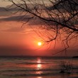 Stock Video: Sunset over lake near tree.