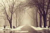 Winter alley in Odessa, Ukraine. — Stock Photo