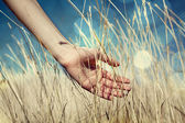 Hand in autumn grass. — Stock fotografie