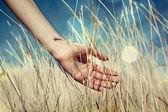 Hand in herfst gras. — Stockfoto