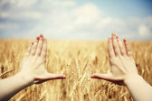 Hand's frame over the wheat field — Stockfoto