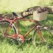 Vintage bicycle waiting near tree — Stock Photo