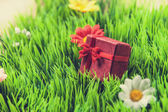 Red gift on a green grass — Foto de Stock
