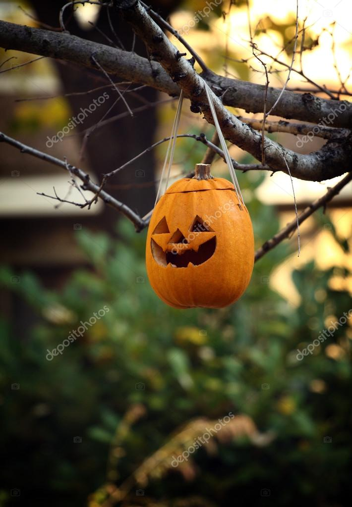 Halloween pumpkin hanging on a tree — Stock Photo #13628269