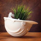 Grass in helmet — Stock Photo