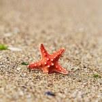 Red starfish — Stock Photo #50934299