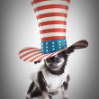 Chihuahua in a top hat — Stock Photo #20351297
