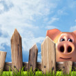 Wooden fence with green grass and pig. — Stock Photo