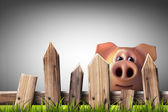 Wooden fence with green grass and pig — Foto de Stock