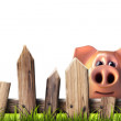 Wooden fence with green grass and pig — Stock Photo