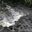 Stock Video: White water rushing down a water fall.