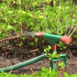Water sprinkler irrigating a lawn. — Stock Video