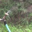 Leaking tap with water spraying out of it. — Stock Video
