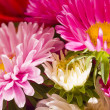 Foto Stock: Daisies bunch