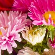 Foto de Stock  : Daisies bunch