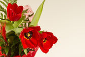 Tulipe rouge — Photo