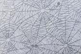 Spinnennetz-muster — Stockfoto