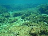 Adriyatik şnorkel — Stok fotoğraf