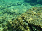 Snorkeling in Adriatic — Stock Photo