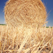 Straw roll on the field — Stockfoto