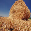 Stock Photo: Straw roll on field