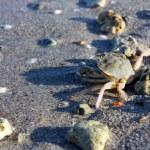Sea crab — Stock Photo #12530367
