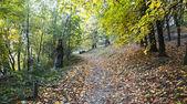 Landscape - autumn park — Stock Photo