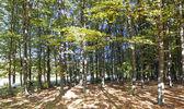 árboles con hojas verdes y amarillos — Foto de Stock