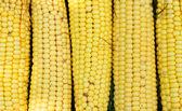 Texture - yellow cobs fresh corn  — Foto Stock