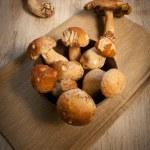 champignons porcini — Photo