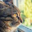 Cat looks outside from the window — Stock Photo