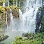 Iguasu Falls — Stock Photo #13703095