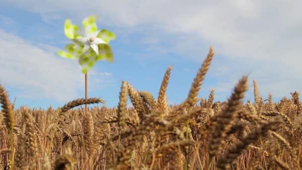Pinwheel de jouet en champ de blé doré — Vidéo