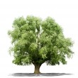 Beautifull green tree on a white background in high definition — Stock Photo #16496693