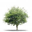Beautifull green tree on a white background in high definition — Stock Photo #16497123