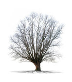 Dead tree on white background in high definition — Stock Photo