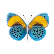 Butterfly — Stock Photo #18671909