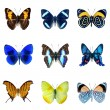 Butterfly — Stock Photo #18672511