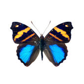 Schmetterling. — Stockfoto