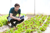 Young business farmer working on his tablet — Stock Photo