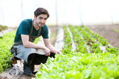 Young attractive farmer verify progress of culture — Stock fotografie